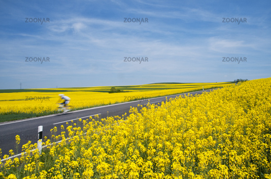 Rape field and bicycle