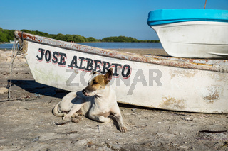 Dog in village lying along a rustic boat, Chelem, Mexico