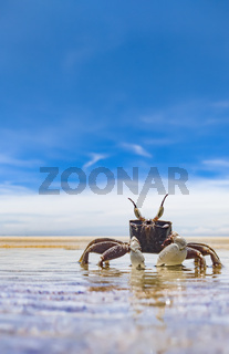Crab on the empty beach