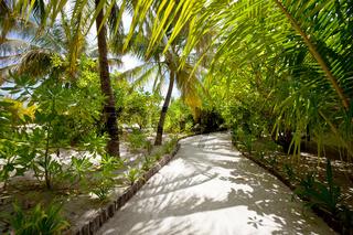 Maldives garden