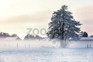morgendliche Winterlandschaft