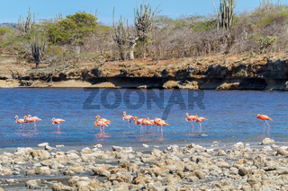 Group of red flamingos standing in water