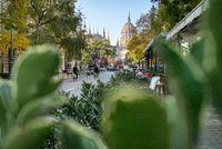 Urban view through green plant to Hungarian paliament building.
