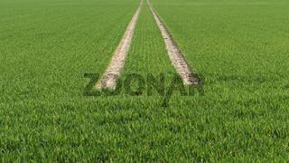 Reifenspuren im Getreidefeld, Deutschland