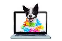 dog booking online