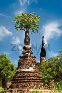 Asian religious architecture. Ancient ruins with growing trees under blue sky. Ayutthaya, Thailand travel landscape and destinations