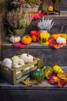 Autumn garden decoration on terrace and patio with pumpkins and heather plants  (Calluna vulgaris)