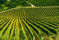 Vineyard landscape at South Styrian Wine Road in Slovenia on border with Austria