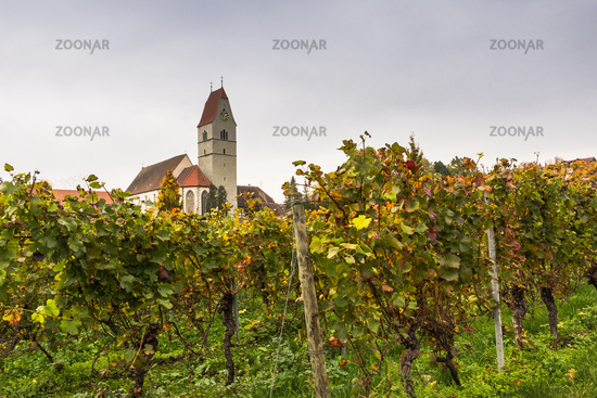Catholic church in Hagnau on Lake Constance with grapevines in autumn, Baden-Wuerttemberg, Germany