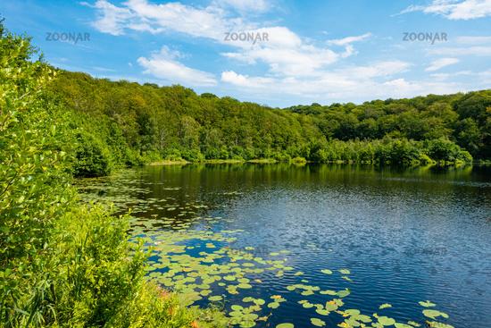 The Black Lake in the Granitz Nature Reserve on Rügen, Mecklenburg-Western Pomerania, Germany
