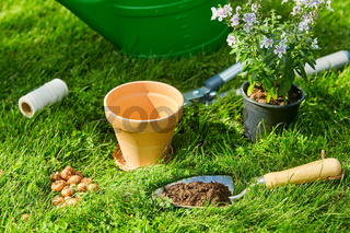watering can, garden tools and flower at summer