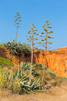 Landscape with Agave plants at rocky mountain