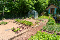 Vegetable garden with green house