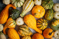 Colorful various kinds mini pumpkins on white background, top view, flat lay. Fall background.