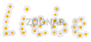 Many white daisies (Marguerite) formed the word 'Liebe', isolated on a white background.