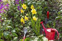 Gardening in spring