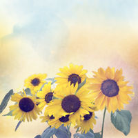 Watercolor digital painting of sunflowers