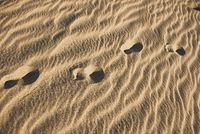 Footprints In The Sand. Early Morning in Desert