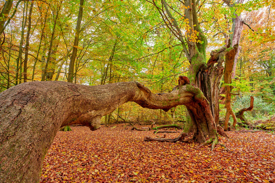 Forest Sababurg Germanyit