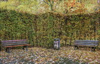 Park at the Schlossteich in town of Chemnitz - The benches in front of the hedge