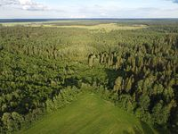 view of the green forest from above, aerial photography