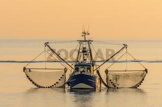 Fischkutter mit ausgelegten Netzen beim Krabbenfang im Abendlicht, Nordsee