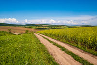 Spring countryside view with dirty road, rapeseed yellow blooming fields, village, hills. Ukraine, Lviv Region.