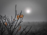 On a gray foggy morning