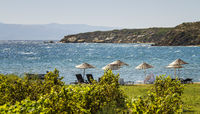 Beds and Straw Umbrellas On A Beach By Grape Vines
