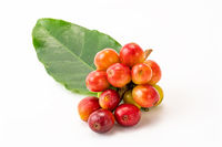 Bunch of coffee fruit with leaf isolated on white background with clipping path.