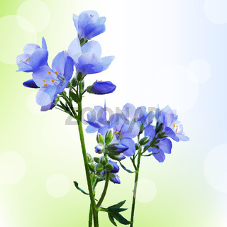 Blue Watercolor Flowers With Bokeh