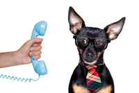 dog on the phone or telephone