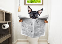 at toilette, toilet seat and reading newspaper dog