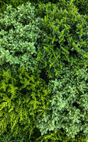 Green from above