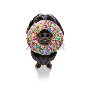 dog with a donut