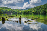 Duck and tree trunks in the lake with waterfalls in a background, Plitvice Lakes