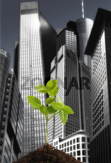 Grünpflanze vor Skyline