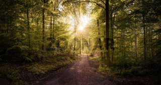 Beautiful Path in the forest with sunrays