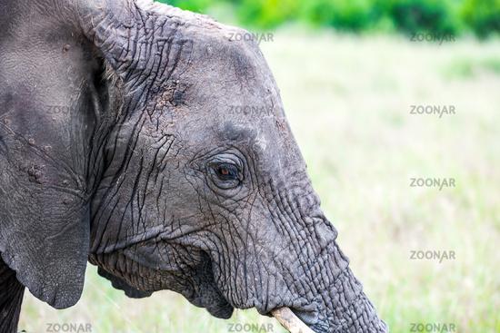 Portrait of a good elephant