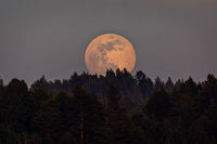Moonrise Over a Northern California Forest, Trinidad, California