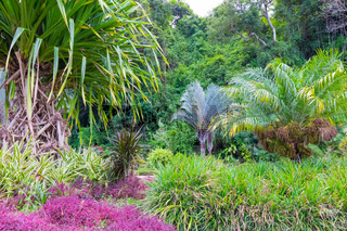 Costa Rica colorful flowers and tropical plants