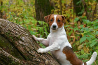 Curious puppy stands on a felled tree