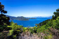 Endeavour Inlet, Tawa Bay, Malborough Sounds, South Island, New Zealand, Oceania.