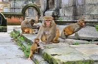Group of monkeys