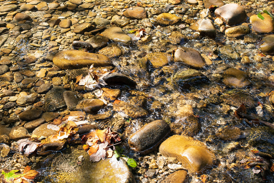 River bed in Allgaeu. Germany