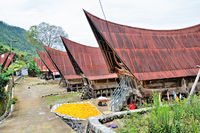 traditional way of life of Batak island Samosir Indonesia