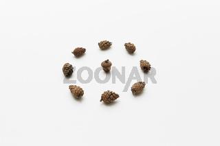 Acorn in circle of cones