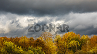Cloudy sky over the crowns of autumn trees