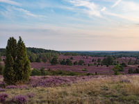 Lueneburg Heath, view from