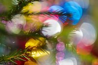 Silhouette of branch Xmas tree with needles. Happy New Year ornament decorations, colorful defocused